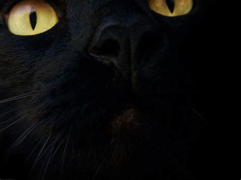 Background Black Cat by Black Cat Wallpaper Black Wallpaper 28305470 Fanpop