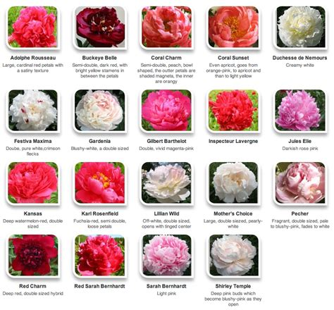 Flower Names and Colors