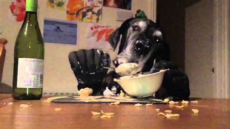dog eating at table dog with arms eating at a table youtube
