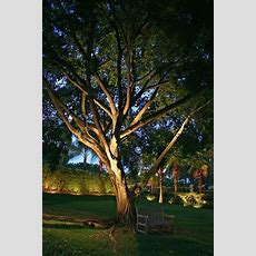 25+ Best Ideas About Outdoor Tree Lighting On Pinterest