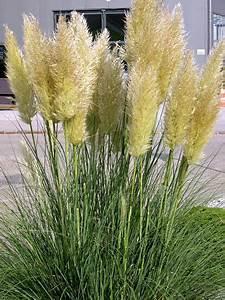 Gräser Kübel Terrasse : gr ser als sichtschutz im k bel google suche garten pinterest k bel gr ser und sichtschutz ~ Markanthonyermac.com Haus und Dekorationen
