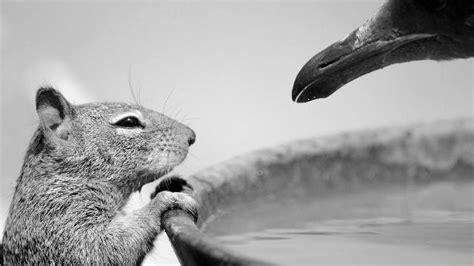 wildlife photographer   year    natural