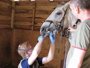 Equine Osteopath Blog