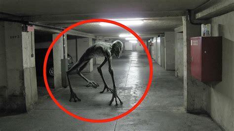 die  seltsamsten kreaturen auf kamera festgehalten