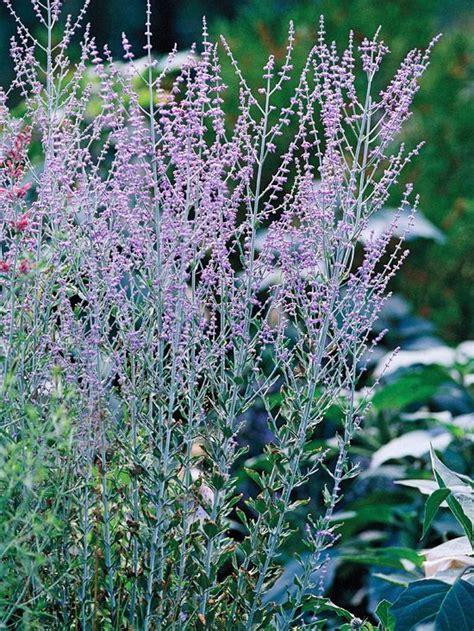 drought tolerant shrubs the best drought tolerant perennials gardens sun and summer