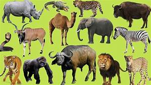Learning Wild Animals Names and Sounds for kids | Learning ...