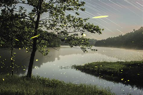 magical long exposure firefly pictures  vincent brady