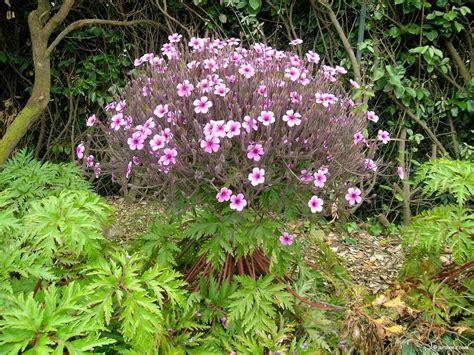 Botanischer Garten Roscoff by Der Exotische Und Botanische Garten Roscoff Photo 7