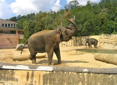 Filebig Mammals Pavilion2 Zoo Prague Wikimedia Commons