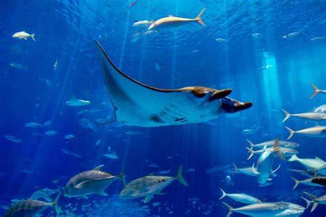 水族館のエイの画像
