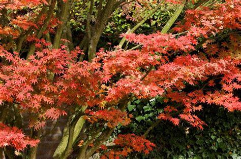 Tipps Für Den Garten Im Herbst by Pflanzen F 252 R Den Herbst Ein Sp 228 Tes Gartengl 252 Ck