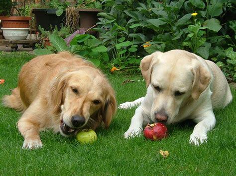 natuerliche ernaehrung fuer hunde deine tiere