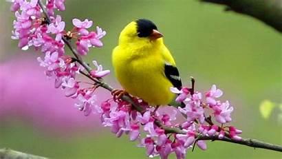 Birds Wallpapers Bird Exotic Wild Animal 4k