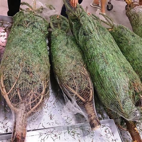 true christmas tree netting machines galvanised 34cm