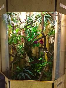Pflanzen Terrarium Einrichten : unsere terrarien alles ber die bunte welt der cham leons ~ Orissabook.com Haus und Dekorationen