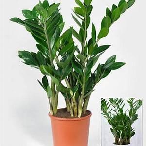 Pflege Für Ledersofa : die besten 25 wohnzimmer pflanzen ideen auf pinterest pflanzen dekor pflanzen f r innen und ~ Sanjose-hotels-ca.com Haus und Dekorationen