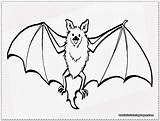 Bat Coloring Pages Realistic Clipart Wings Drawing Bats Baseball Battleship Flower Sun Getcolorings Template Getdrawings Printable Comic Excellent Print Webstockreview sketch template