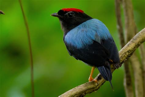 new birds from version 2 0 of our panama birding app
