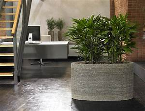Pflanzen Für Innen : tropische blattpflanzen raumpflanzen exotische pflanzen ~ Michelbontemps.com Haus und Dekorationen