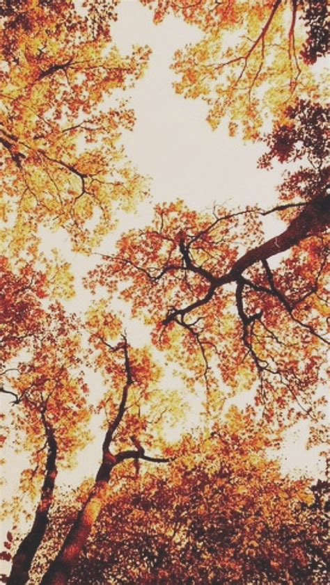 Autumn Season Wallpapers For Phone by
