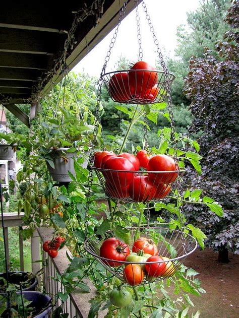 Hanging Vegetable Garden by Pin By Palacios On Gardening Apartment Vegetable