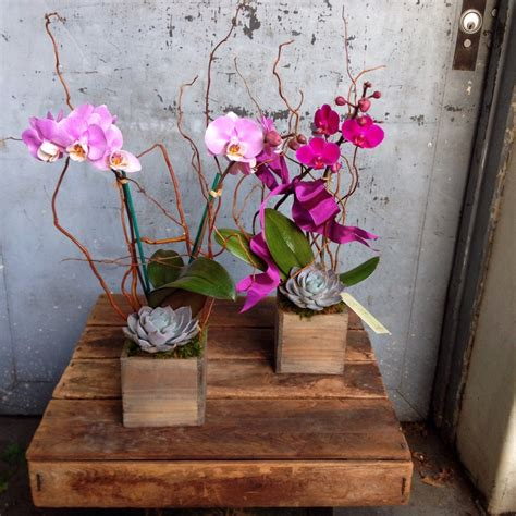 orchid gardens pasadena florist brad larsen florals