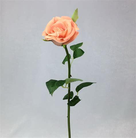 ดอกกุหลาบ Peach