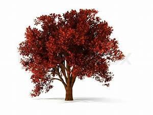 Baum Mit Roten Blättern : isolierten herbstlichen baum mit roten bl ttern stock foto colourbox ~ Eleganceandgraceweddings.com Haus und Dekorationen