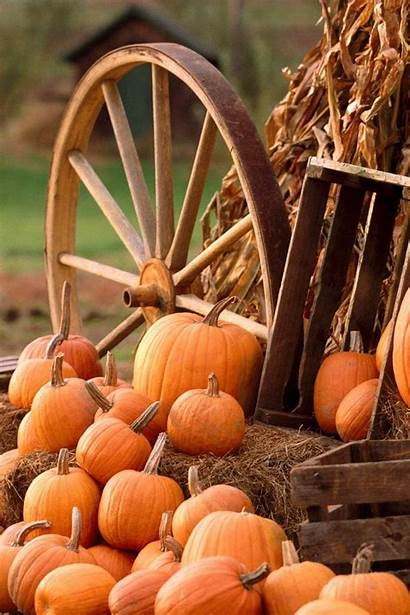 Pumpkin Autumn Wallpapers Harvest