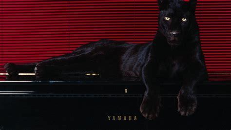 Pantera Animal Wallpaper - animals pantera wallpaper 1920x1080 293804