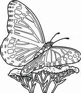 Butterfly Coloring Pages Print Butterflies Printable Getdrawings Colorings sketch template