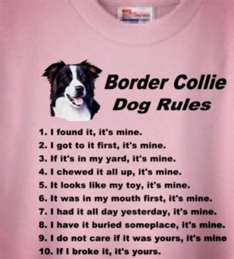 Border Collie Meme - 25 best ideas about dog rules on pinterest pet quotes cute dog quotes and i love dogs