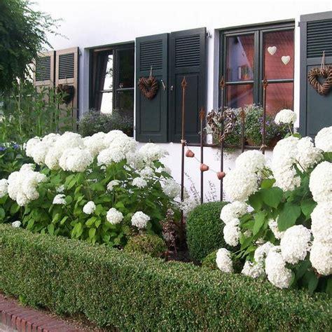 Welche Pflanzen Für Sonnigen Vorgarten welche pflanzen f 252 r sonnigen vorgarten