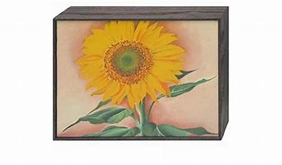 Sunflower Georgia Keeffe Maggie Gardenpicdesign