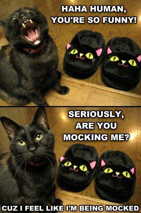 ha ha hano lolcats lol cat memes funny cats