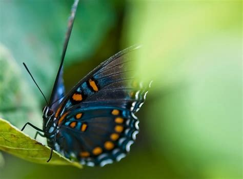 butterfly quotes lovequotesmessages