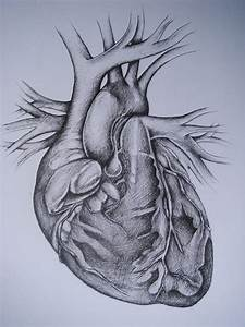 Human Heart Drawing - Bing images