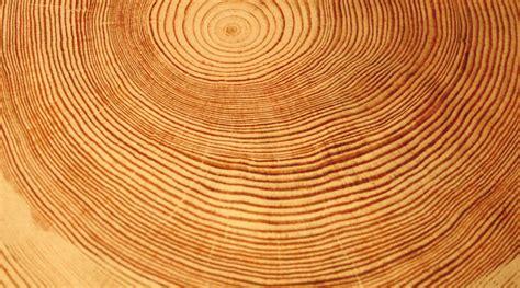 Le En Bois Flotté Le Bois Acteur De La Lutte Aux Changements Climatiques