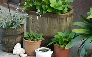 Hortensie Umpflanzen Im Topf : hortensie im topf berwintern page 2 mein sch ner garten forum ~ Orissabook.com Haus und Dekorationen