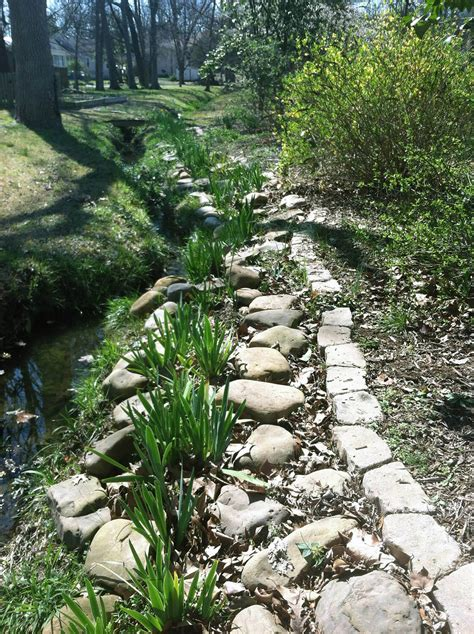 erosion plants stream bank erosion control using rocks and flowering plants