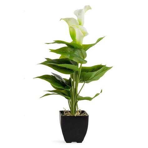 potted calla potted calla lily 10x40cm 4 40 potted plants plants