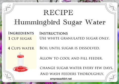 hummingbird sugar water choose  feeder
