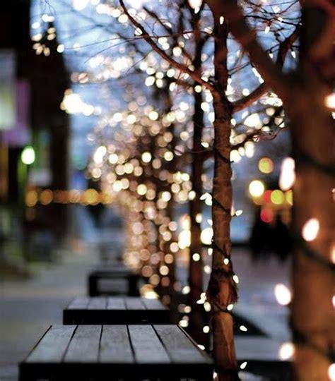 trees twinkle lights