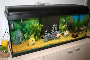 aquarium poisson pas cher