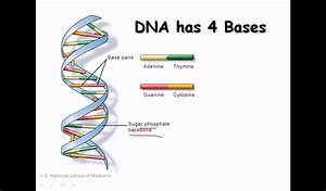 14  Dna Strand  Structure And Function