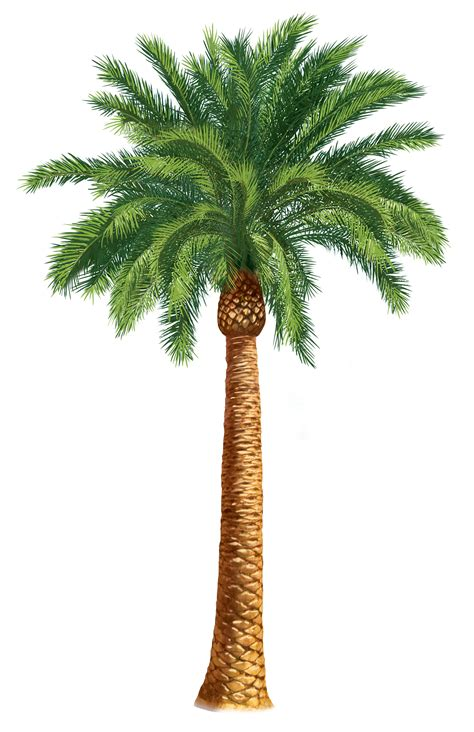 Clipart Palm Tree Palm Trees Clip Units 5 6 Clipart The Gospel