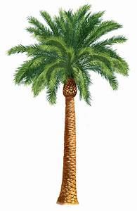 Palm Trees Clip Art   Units 5 + 6 Clipart - The Gospel ...