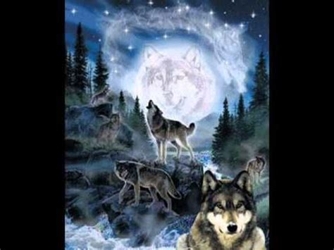 indian wolf facebook cover  google search native