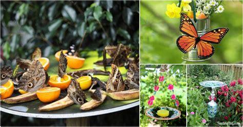 diy butterfly feeders   add beauty