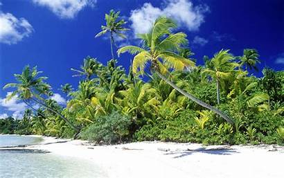 Coconut Tree Wallpapers Backgrounds Tag